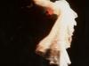 15-revolution-1997